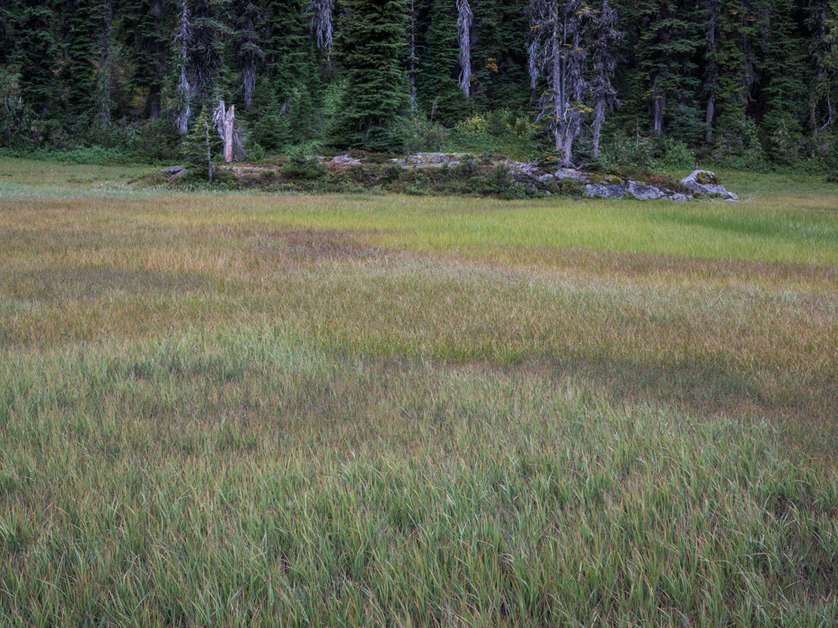 Meadow grass colors
